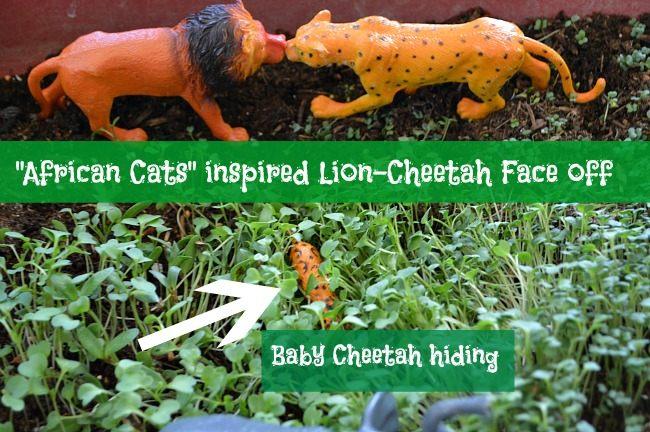 lion cheetah fight small world play