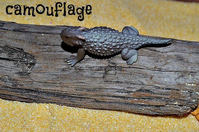 animal activities - camouflage