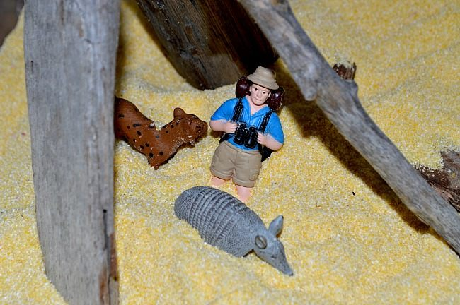 explorer in a small world