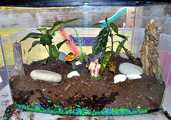 fish tank terrararium
