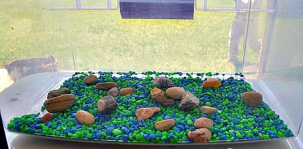 gravel inside the terrararium