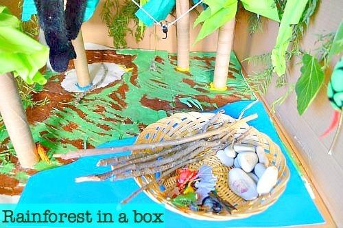 rainforest small world in a box