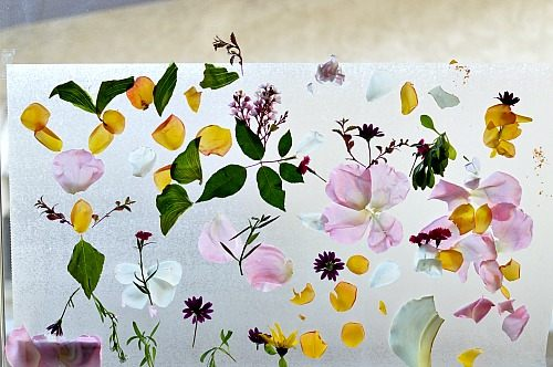 sticky garden spring craft for kids