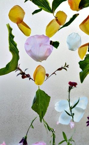 sticky garden using contact paper